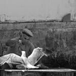 O Homem o peixe e a gaivota