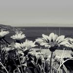 Encosta florida ___