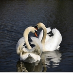 love in calm waters