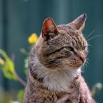 Mr_ Cat