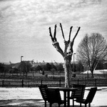 A mesa e a Árvore