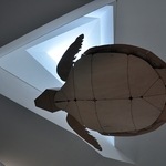 Tartaruga voadora