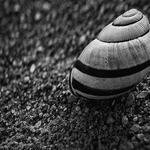 Empty Life Shells