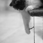 Gatão, gato___gatinho