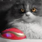 O gato e o rato
