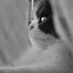menino estás à janela__