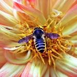 Mergulhada no doce néctar