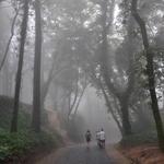Caminhos de névoa