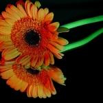 O reflexo colorido