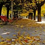 Tapete de folhas secas ___