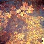 Outono aquático