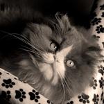 O meu gato__