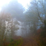 Bosque enevoado