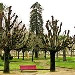 Parque Dr. Manuel Braga..