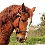 """Um cavalo chamado """"Chocolate"""""""