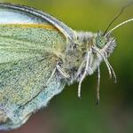 """ Retrato de uma borboleta"""