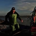 Pescador de sável
