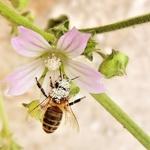 A abelha e a polinização