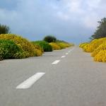 Pela estrada___