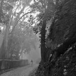 Rotas da neblina