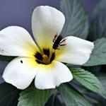 A Flor e o Insecto Curioso!