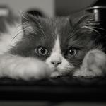 o meu gatito______