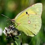 Delicia de nectar