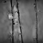 solitude___