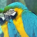 Verde__Amarelo__Azul! Tricolor!