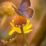 A minha borboleta azul