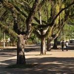 Uma tarde de domingo - Piracicaba