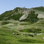 Pistas de neve no verão com vaquinhas