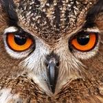 O olhar da Coruja