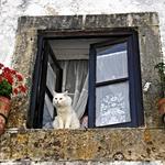 O Gato à Janela!