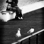 Mockin'bird
