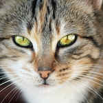 olhos de gato_________