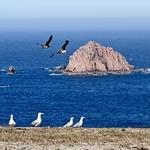 Berlengas - habitat natural de gaivotas