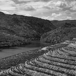 Quintas do Douro