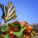 Buscando o néctar