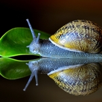 Vida de caracol