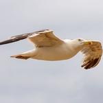 O voo da gaivota