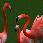 flamingos______