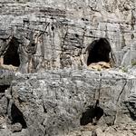 Peniche - A Caveira, na falesia sul