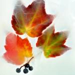 Les feux de l'automne