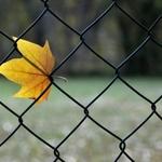 Restos de Outono