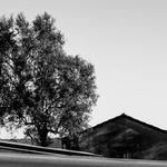 A árvore e a velha casa