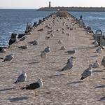 O pontão das gaivotas