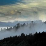 Nevoeiros matinais