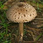 Um cogumelo