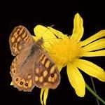 A 1ª borboleta deste ano